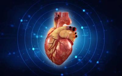 陳根:首顆心臟類器官誕生,心臟解謎更進一步